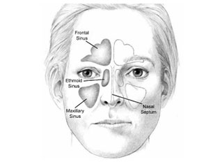 Sinus Anatomy Image